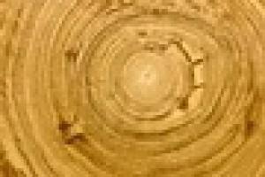Деревянный потолок - преимущества, виды, советы по подбору